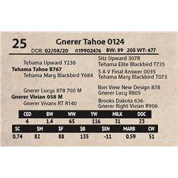 Gnerer Tahoe 0124