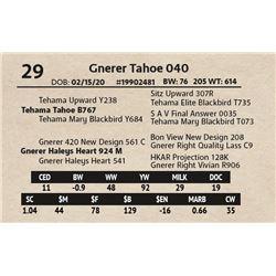 Gnerer Tahoe 040