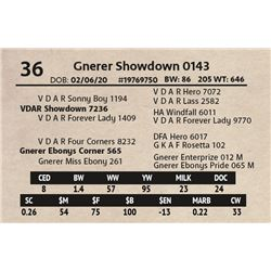 Gnerer Showdown 0143