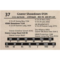 Gnerer Showdown 0134