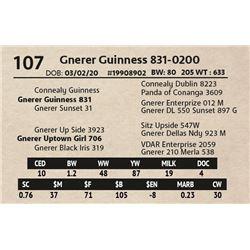 Gnerer Guinness 831-0200
