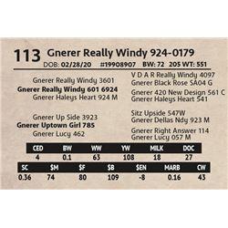 Gnerer Really Windy 924-0179