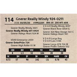 Gnerer Really Windy 924-0211