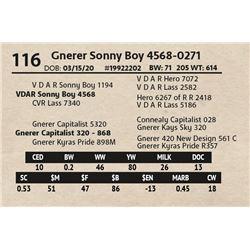 Gnerer Sonny Boy 4568-0271