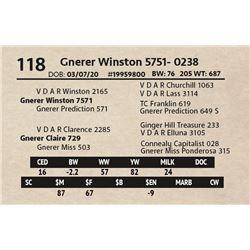 Gnerer Winston 5751- 0238
