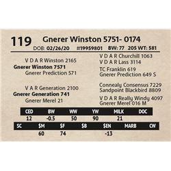 Gnerer Winston 5751- 0174