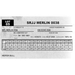 SRJJ MERLIN 0038
