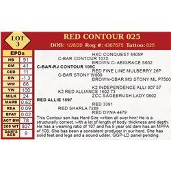 RED CONTOUR 025