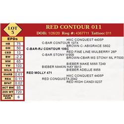RED CONTOUR 011