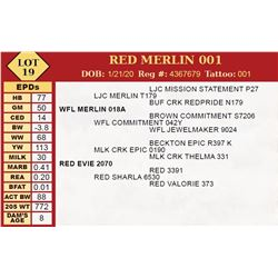 RED MERLIN 001