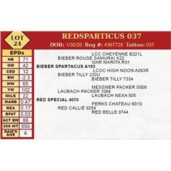 REDSPARTICUS 037