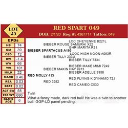 RED SPART 049