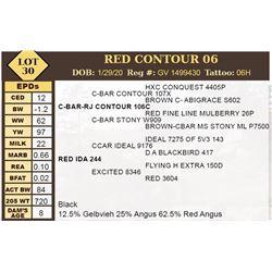 RED CONTOUR 06