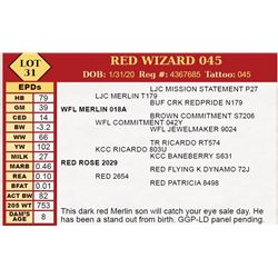 RED WIZARD 045