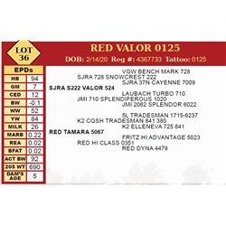 RED VALOR 0125