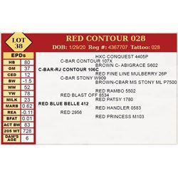 RED CONTOUR 028
