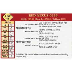 RED NEXUS 0226