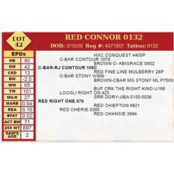 RED CONNOR 0132