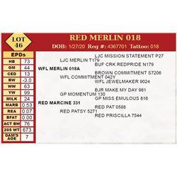 RED MERLIN 018