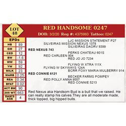 RED HANDSOME 0247