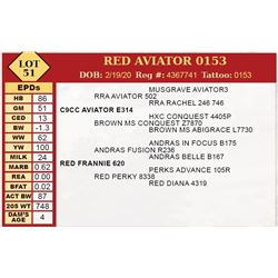 RED AVIATOR 0153