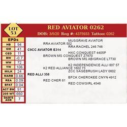 RED AVIATOR 0262