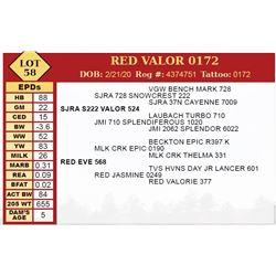 RED VALOR 0172