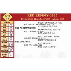 RED REMMY 0285