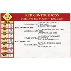 RED CONTOUR 0255