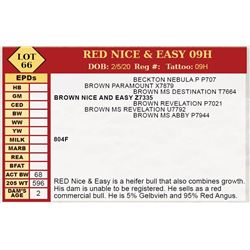 RED NICE & EASY 09H