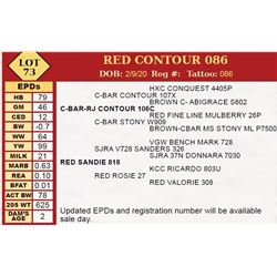 RED CONTOUR 086