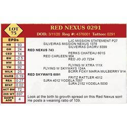 RED NEXUS 0291