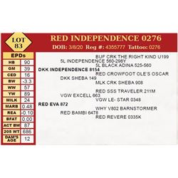 RED INDEPENDENCE 0276