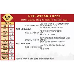 RED WIZARD 0223