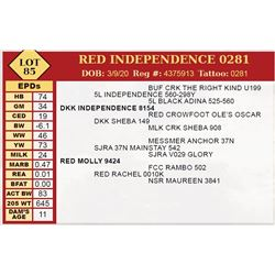 RED INDEPENDENCE 0281