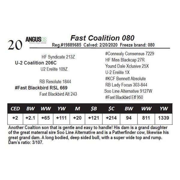 Fast Coalition 080