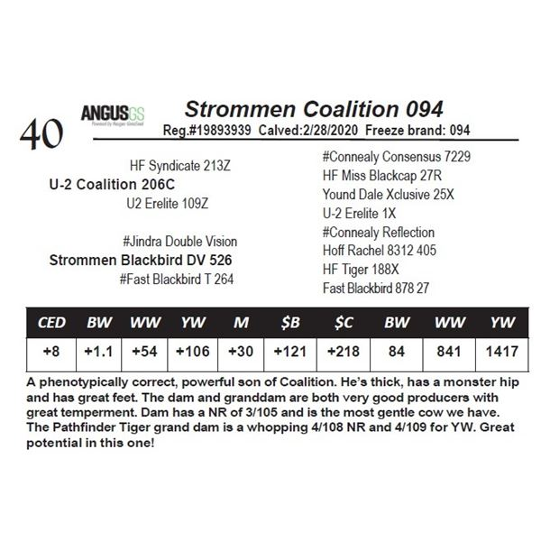 Strommen Coalition 094