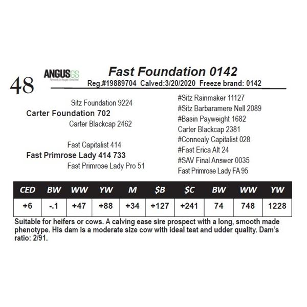 Fast Foundation 0142