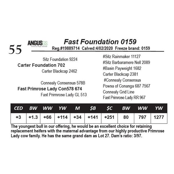 Fast Foundation 0159