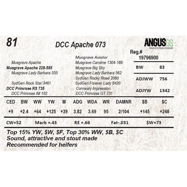 DCC Apache 073