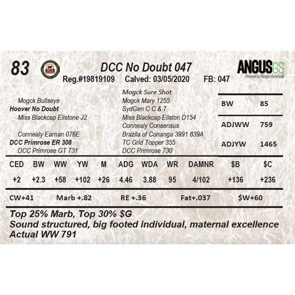 DCC No Doubt 047