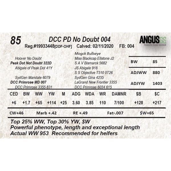 DCC PD No Doubt 004