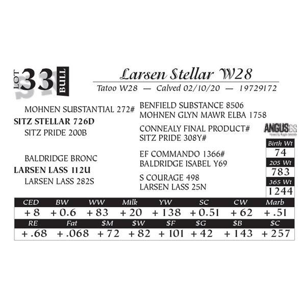 Larsen Stellar W28