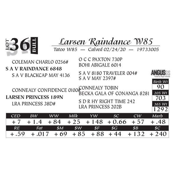 Larsen Raindance W85