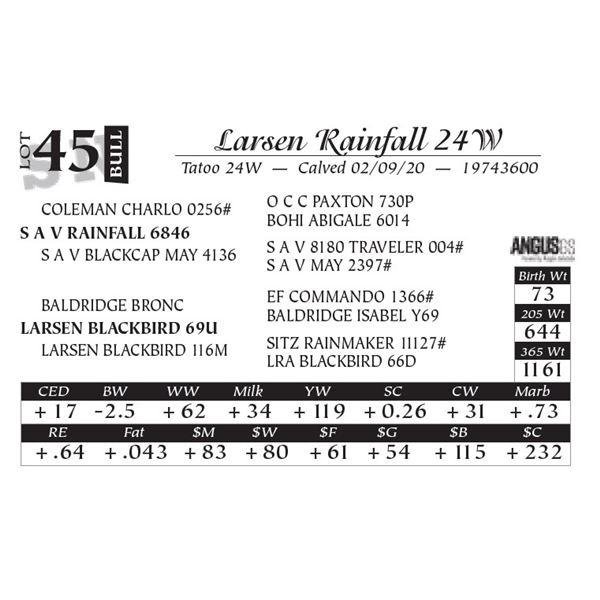 Larsen Rainfall 24W