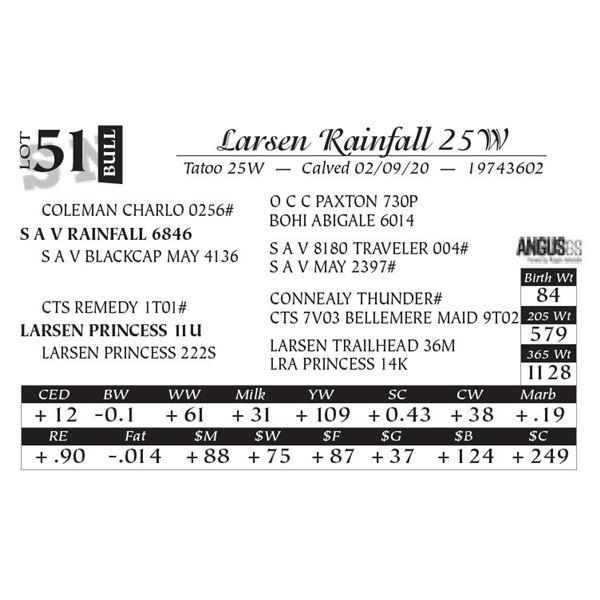 Larsen Rainfall 25W
