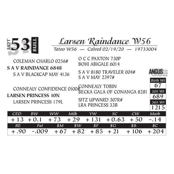 Larsen Raindance W56