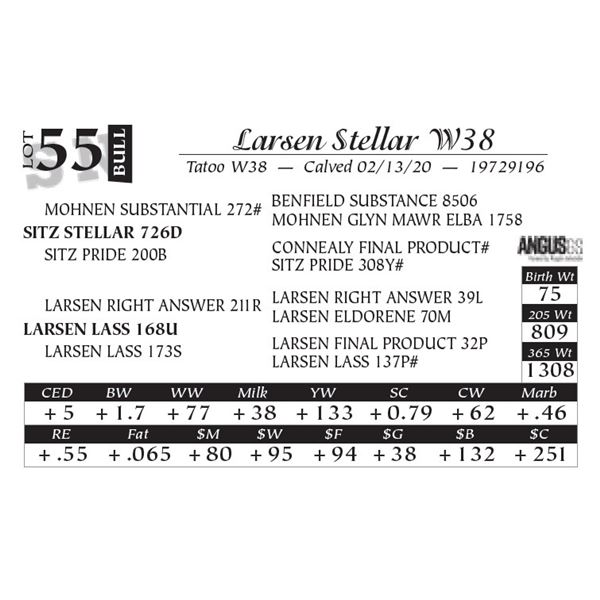 Larsen Stellar W38