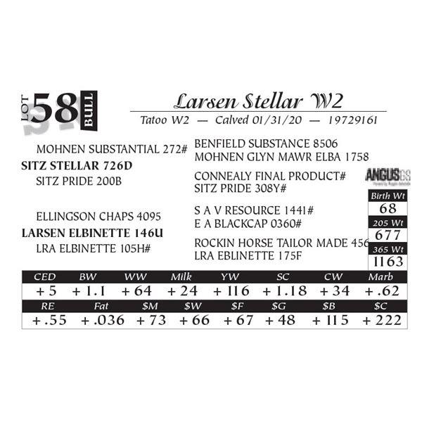 Larsen Stellar W2