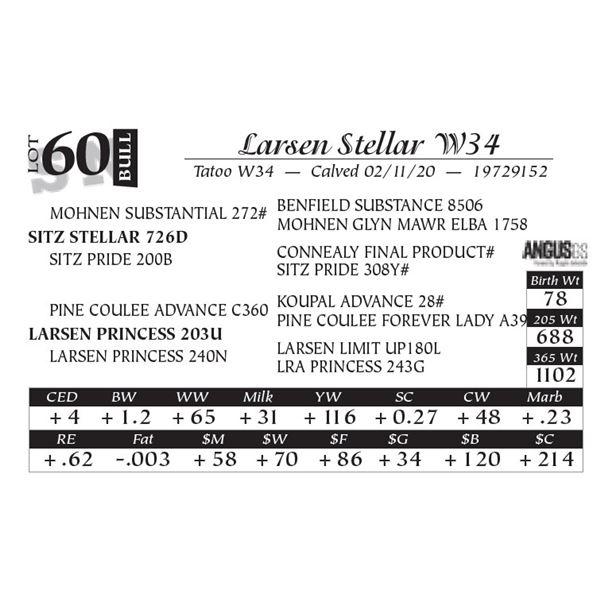 Larsen Stellar W34